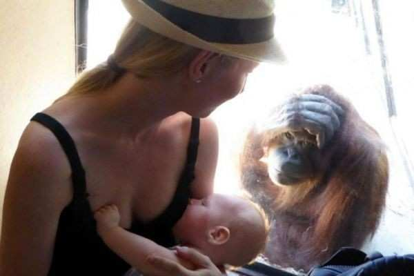 Nursing Mom Has Curious, Unexpected Onlooker at Melbourne Zoo